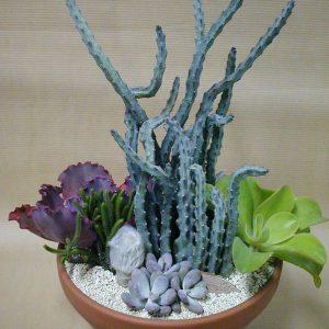Monvillea & succulents