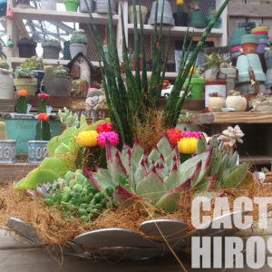 Ruby cactus & Succulents